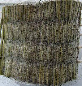 カビ抵抗性試験 い草畳